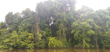 FWU - Regenwald - Trees at Amazonas - small
